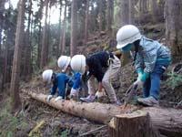 トトロ幼稚舎 丹沢植林作業